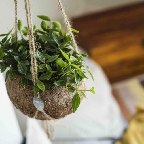 pflanzenampel im kinderzimmer